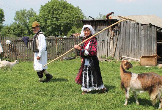 Vetel-gospodarie-Boia-Barzii